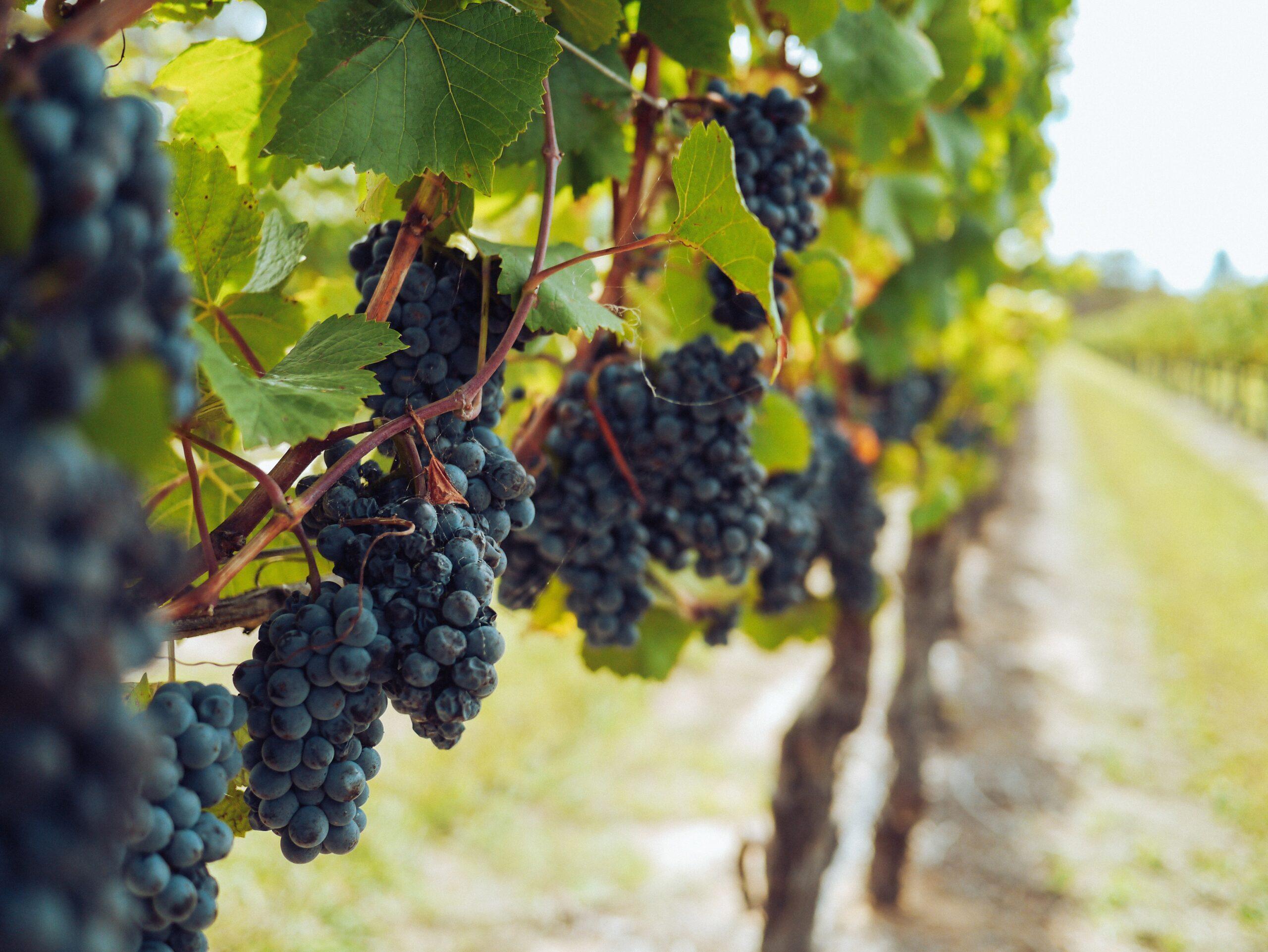 WeinVestment